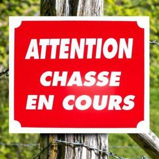 Battue de chasse - Forêt domaniale d'Hémilly (2)