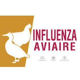 Influenza aviaire picto.jpg