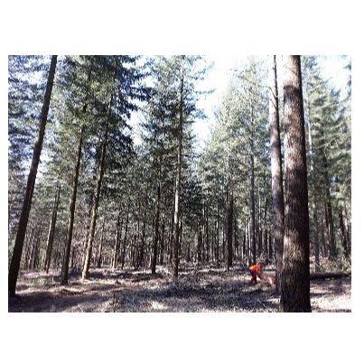 Le bois des Chambaran