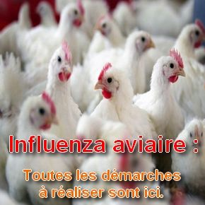 Influenza aviaire _pub_.jpg