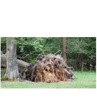 arbre deraciné.jpg